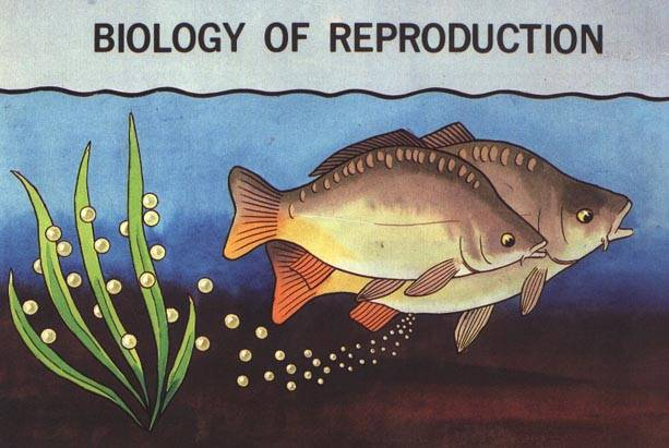 Breeding and Reproduction of Fish - Fishing A-Z